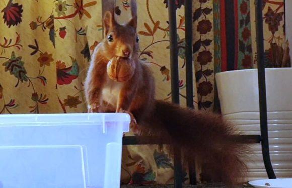 Das Eichhörnchen Video